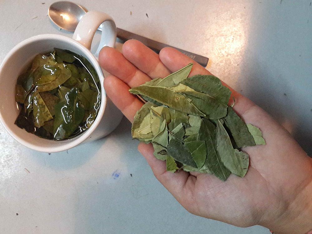 Koka yaprağı ve koka çayı