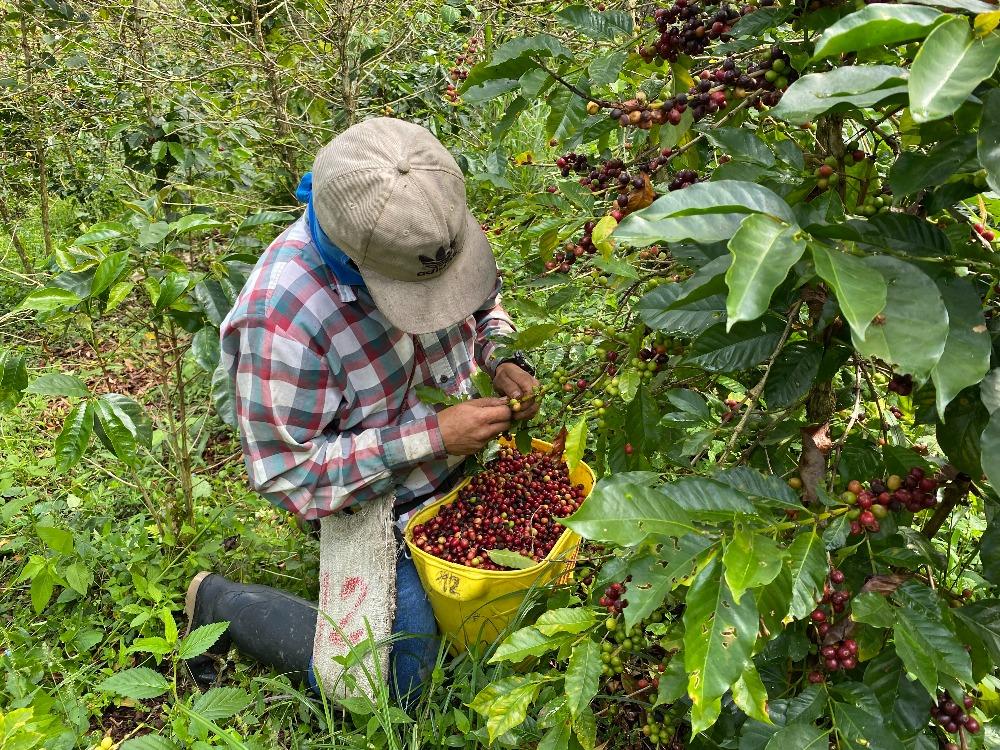 Kolombiya Kahve Turu
